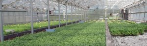 Quality Greenhouse Systems - A Leading Manufacturer | Rimol Greenhouses